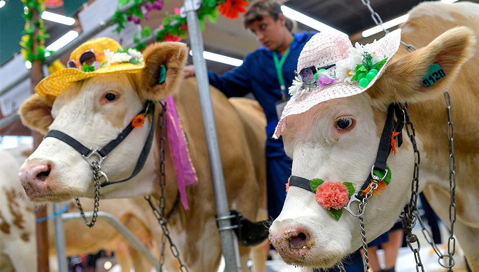 «Мы — не дойные коровы»: Почему москвичкам не стоит жить с приезжими