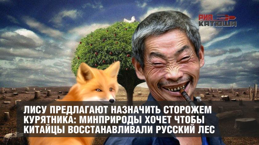 Лису предлагают назначить сторожем курятника: Минприроды хочет чтобы китайцы восстанавливали Русский лес