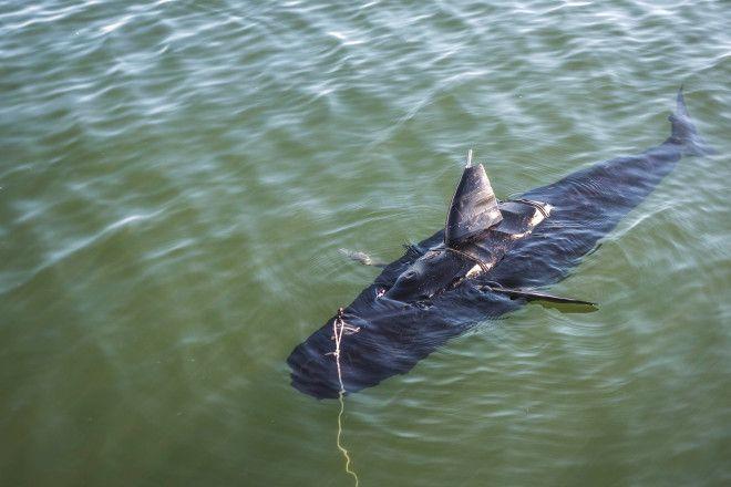 Беспилотное подводное судно