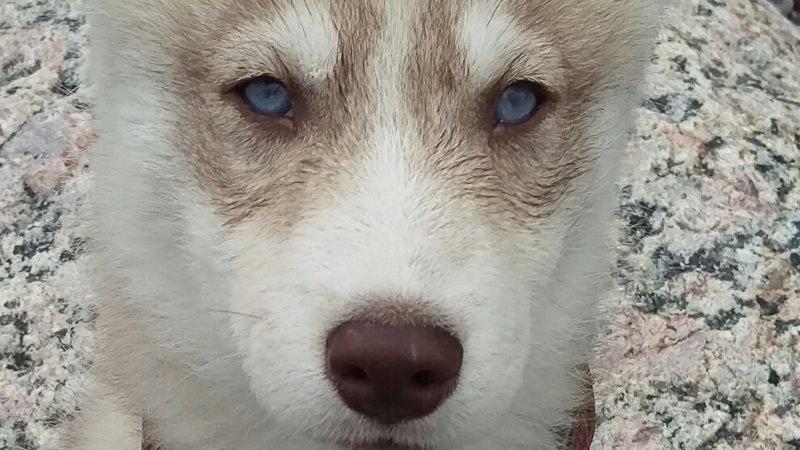 Холодные глаза