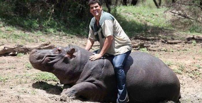 Тони Жубер – спаситель и приемный отец бегемота Джессики