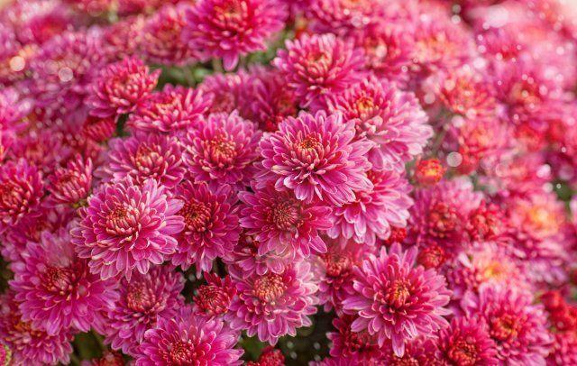 13 восхитительных растений, …