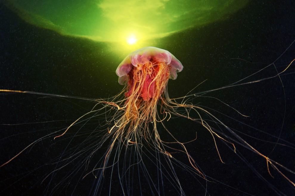 Semyonov14 Морские организмы на фотографиях Александра Семёнова