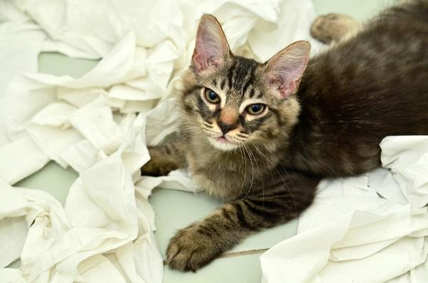 Коты против туалетной бумаги котики, туалетная бумага