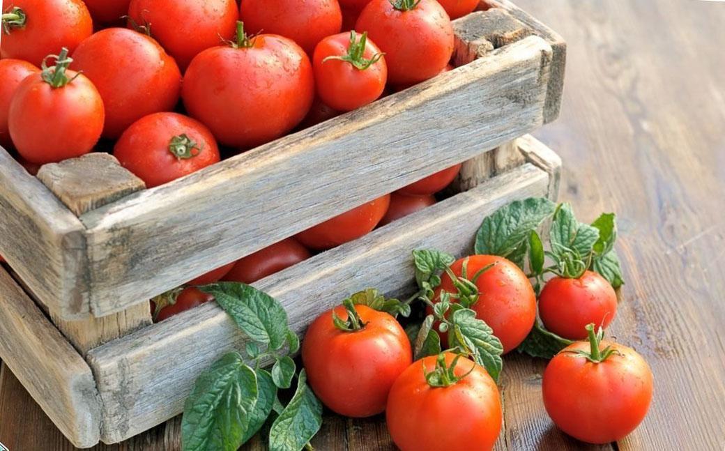 Йод не допустит появления фитофторы на помидорах