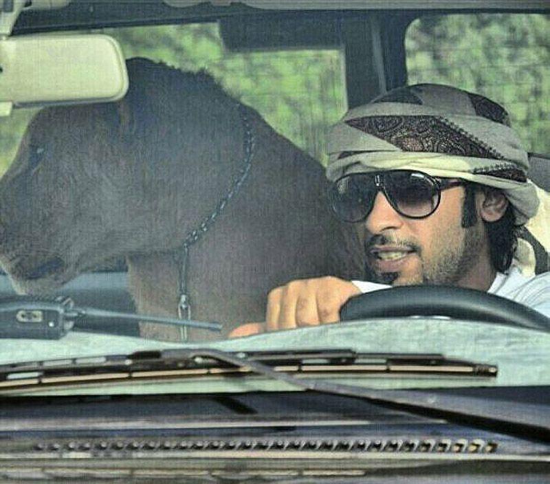 catsncars41 Хищные кошечки и дорогие машины: досуг арабского миллионера