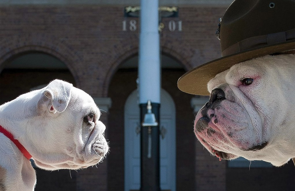 11chesty-the-marine-corps-mascot-and-his-successor