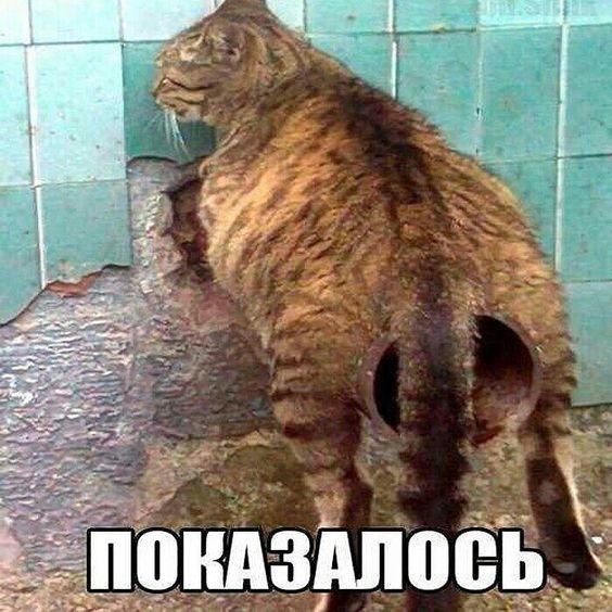 Очередь к ветеринару. Кто с собачкой, кто с кошкой, кто с птичкой..