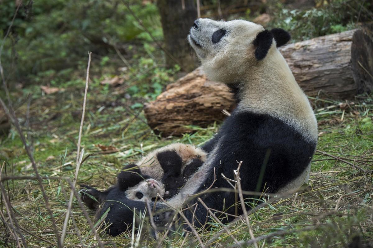 Ферма панд в провинции Сычуань