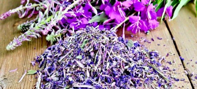 цветы иван чай как собирать и сушить