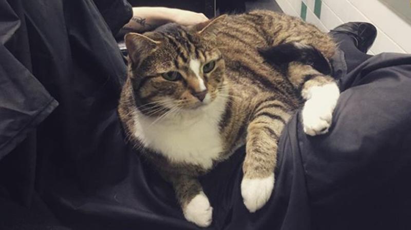 Лежу за еду: как салонный кот снимает стресс клиентов парикмахерской
