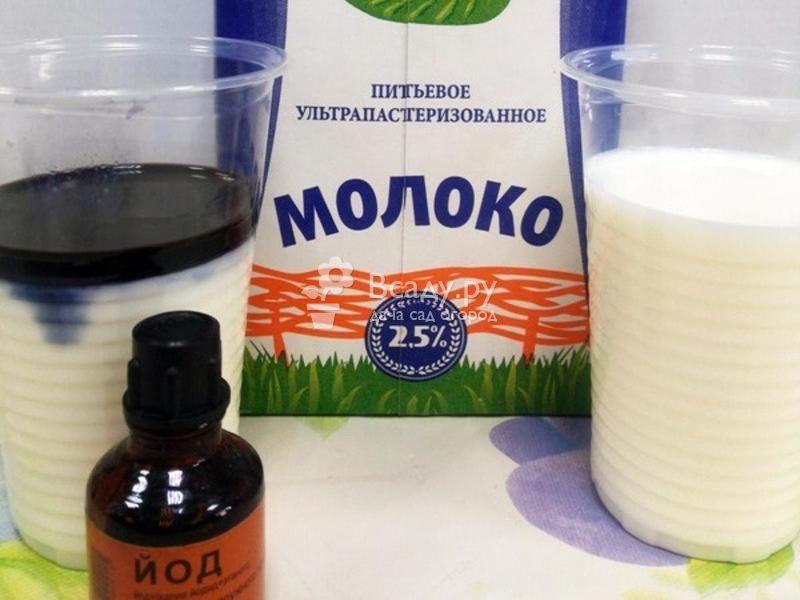 Йод - отличное средство против болезней огурцов