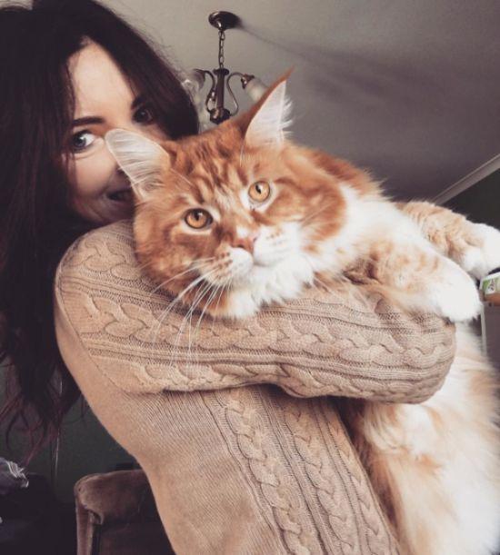 120-сантиметровый кот может …