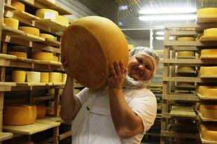 Он сказал: «Сыр!» Российский фермер отправит пармезан в Европу на «ГАЗели»
