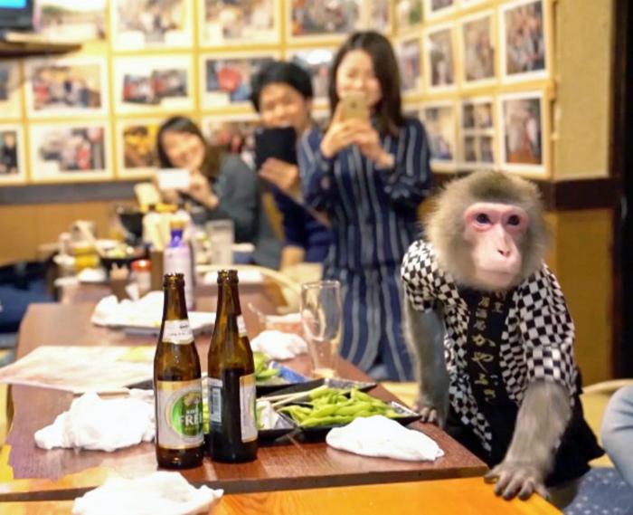 Ресторан с обезьянками в Японии.