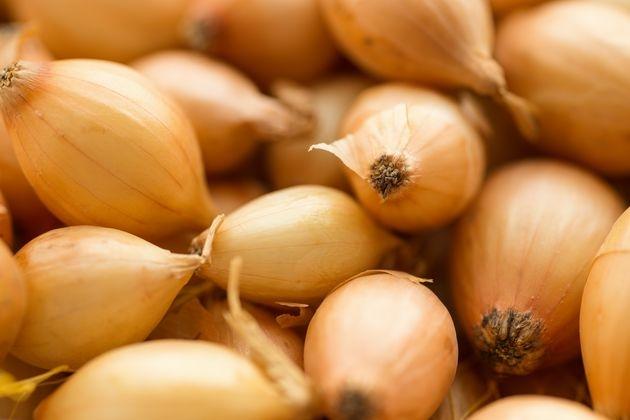Как сохранить лук-севок