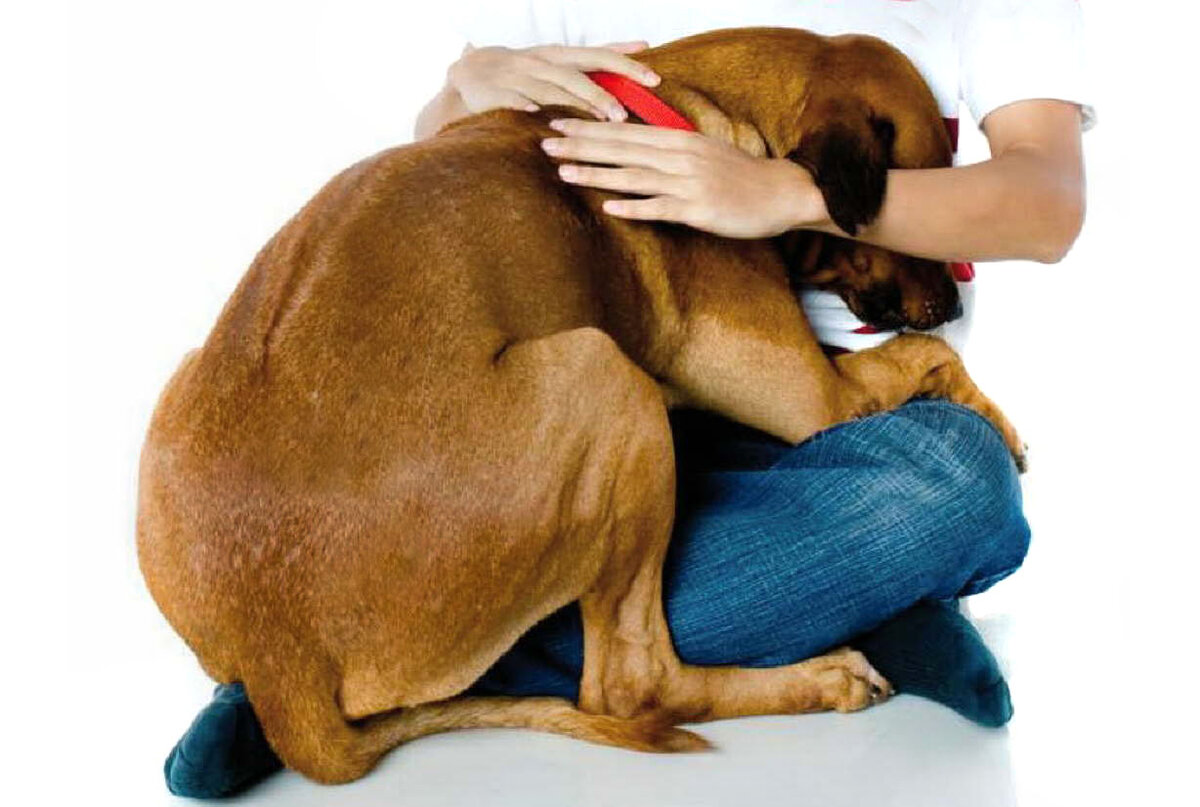 За своих собак любого порву