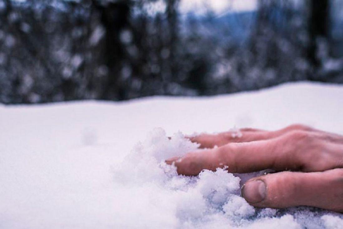 Первый снег засутки убил на…