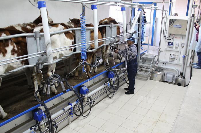 В Сибири открываются семейные фермы