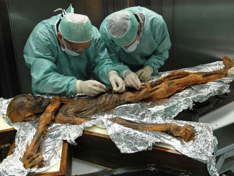 Последний ужин «ледяного человека»: ученые выяснили, чем питался Эци