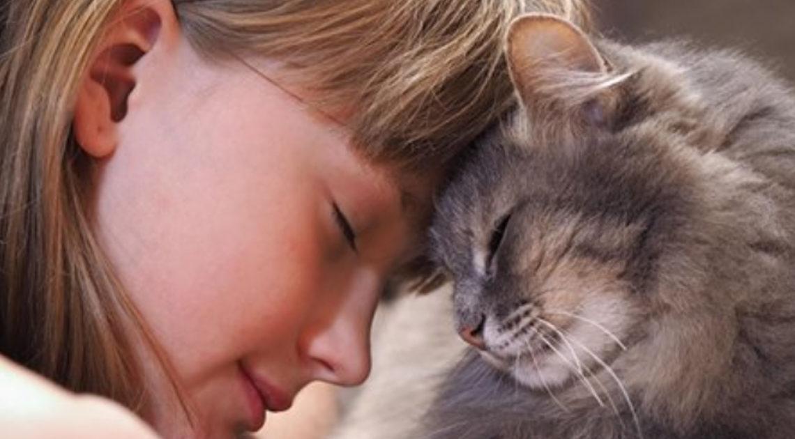 Любовь к котам говорит о психологическом здоровье