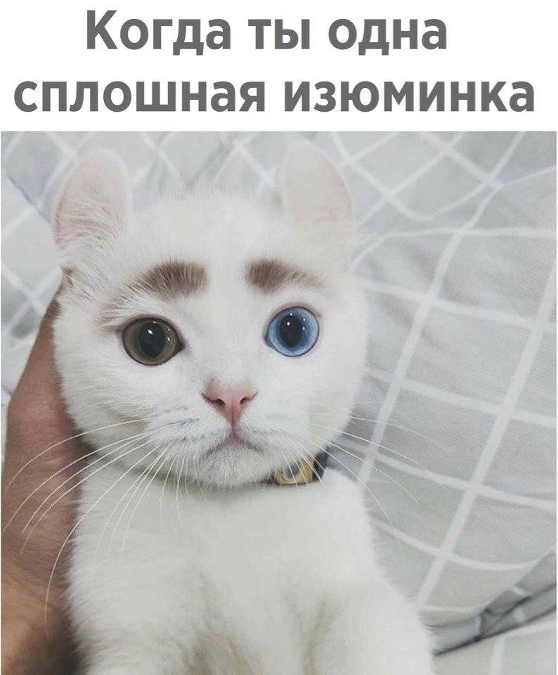 Котенок-чудо!