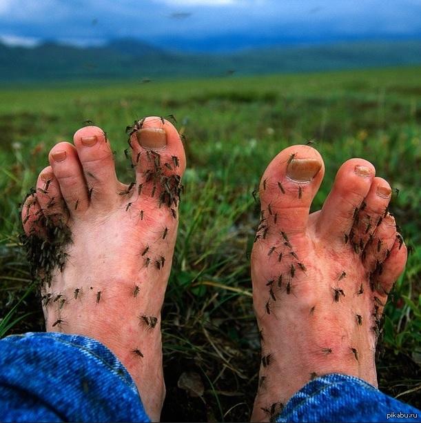 Как летом на даче спастись от насекомых