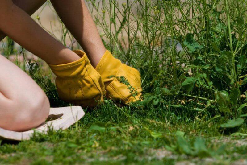 тату чем вывести траву с дорожек ароматерапии считают, что