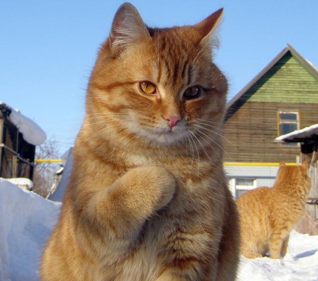 17 фотографий котов, сделанных в самый нужный момент