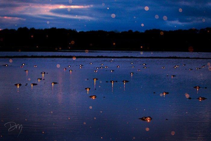 Парень просто сфотографировал ночное болото