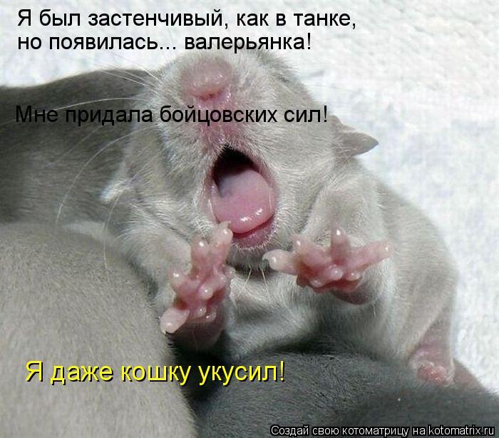 Котоматрица: Я был застенчивый, как в танке,  но появилась... валерьянка! Мне придала бойцовских сил! Я даже кошку укусил!