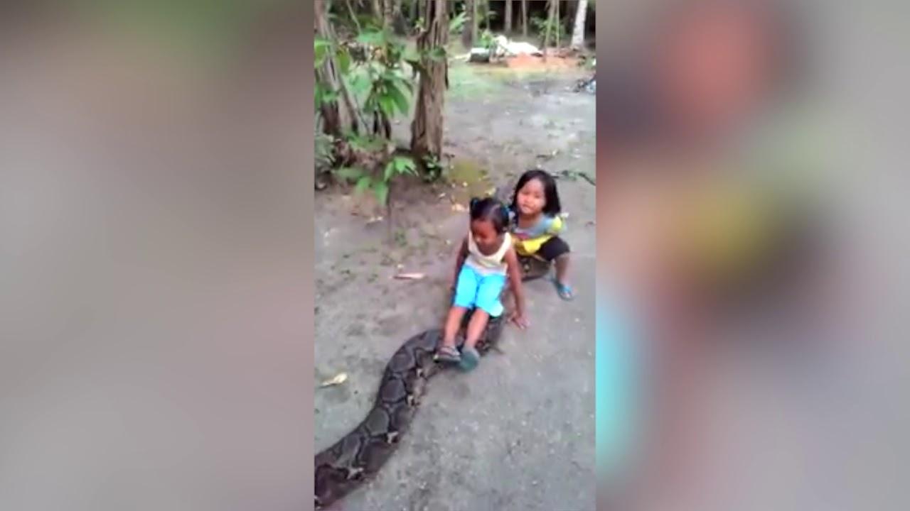 Маленькие девочки оседлали гигантского питона