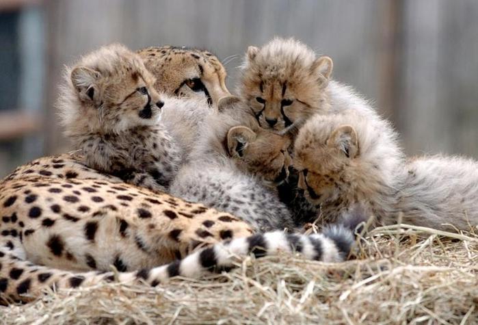 Животные - родители и дети. Комментарии : Дневники на КП