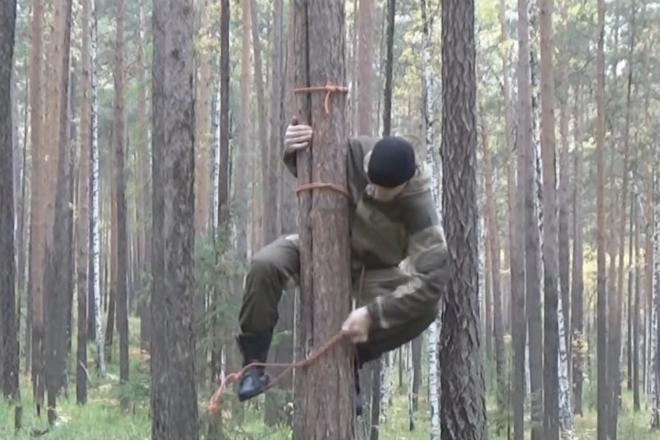 Как легко и просто залезть на любое дерево