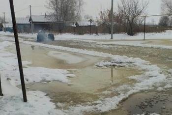 Жильцы деревни Куяново в Татарстане рассказали о вредительстве бобров