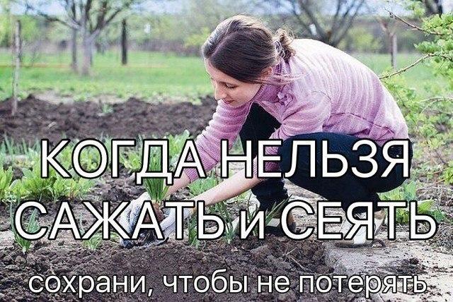 КОГДА НЕЛЬЗЯ САЖАТЬ и СЕЯТЬ. Народные приметы для садоводов-огородников!