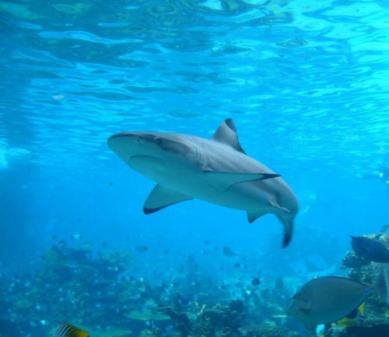 Единственное озеро планеты, где живут акулы