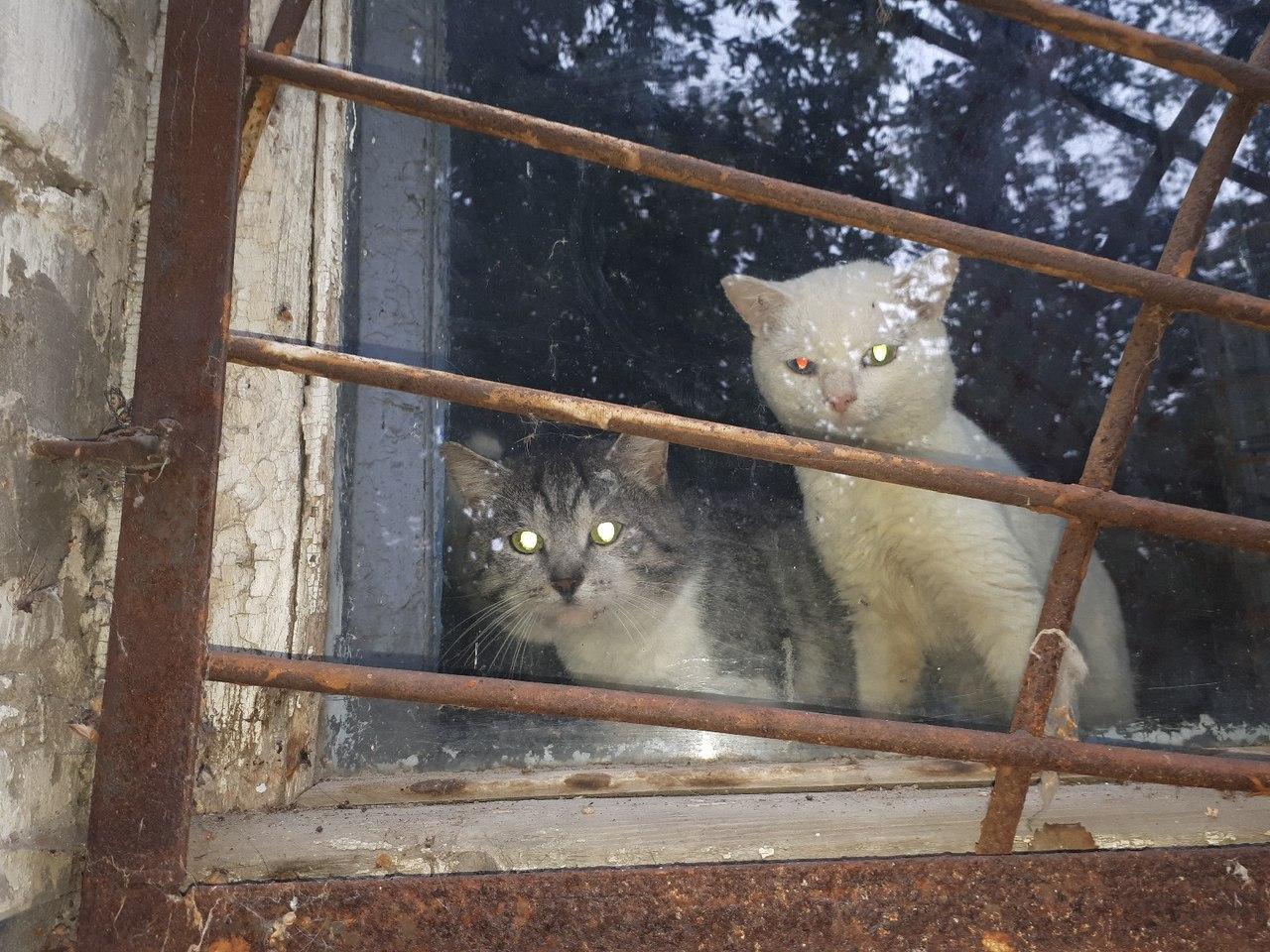 В пустой холодной квартире три кота. Старушку-хозяйку увезли в психиатрическую клинику. Им нужен дом.
