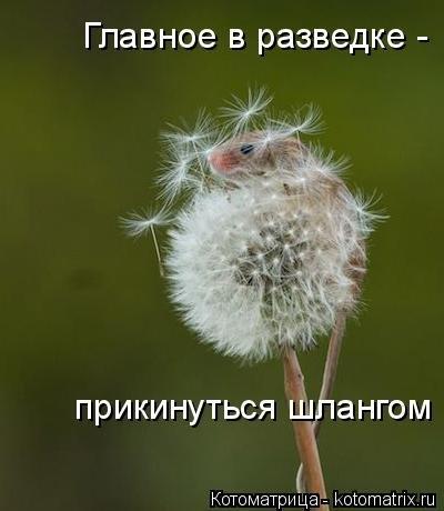 """""""ОТ РАЗВЕДКИ НЕ СКРОЕШЬСЯ"""" Веселая """"звероматрица"""""""