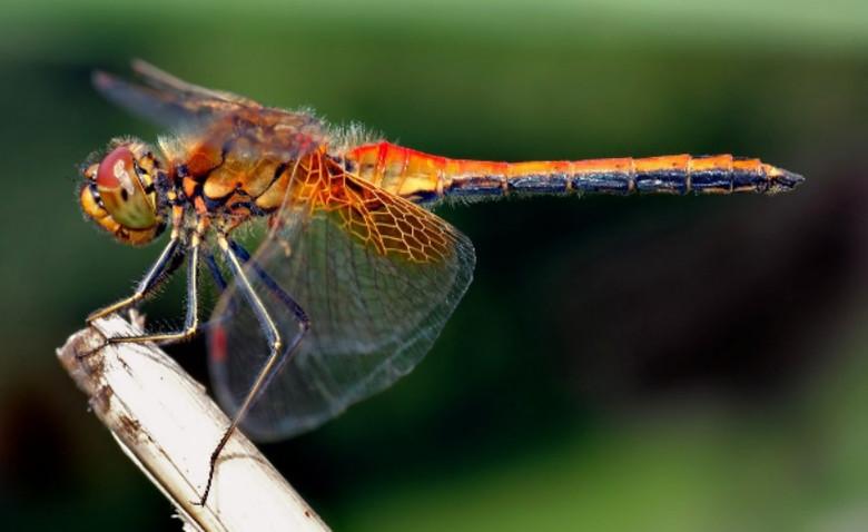 На Земле резко сократилось количество насекомых