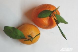 Переносят ли мандарины грипп?