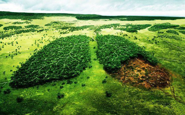 Леснику на радость: учёные разработали ДНК-тест, который поможет бороться с незаконной вырубкой деревьев