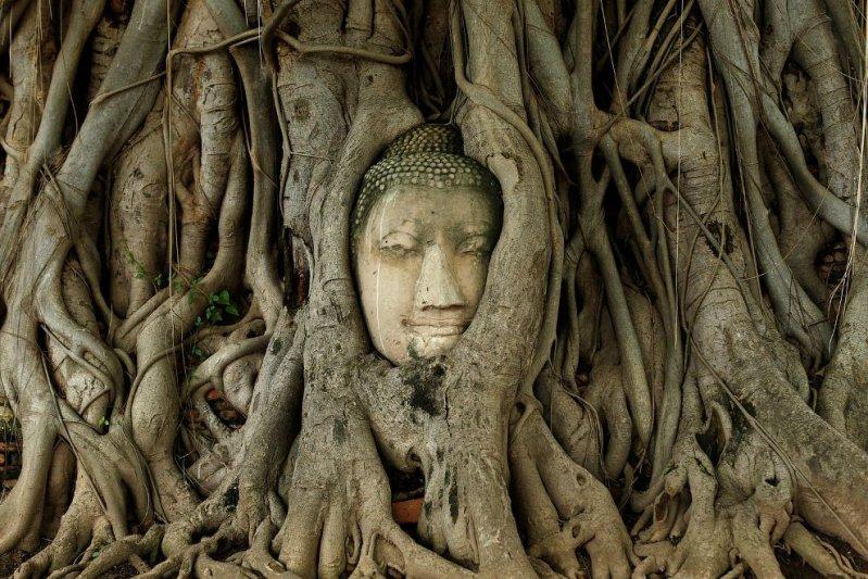 Необычные деревья из разных уголков планеты