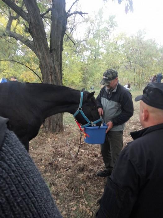 Хозяин привязал коня короткой веревкой к дереву и не оставил даже воды