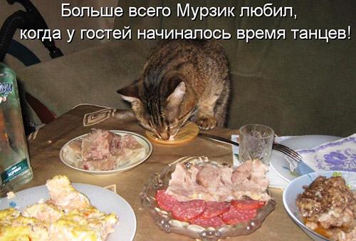 Кулинарные котоматрицы (посл…