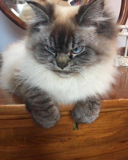 Кот, который ненавидит всё вокруг