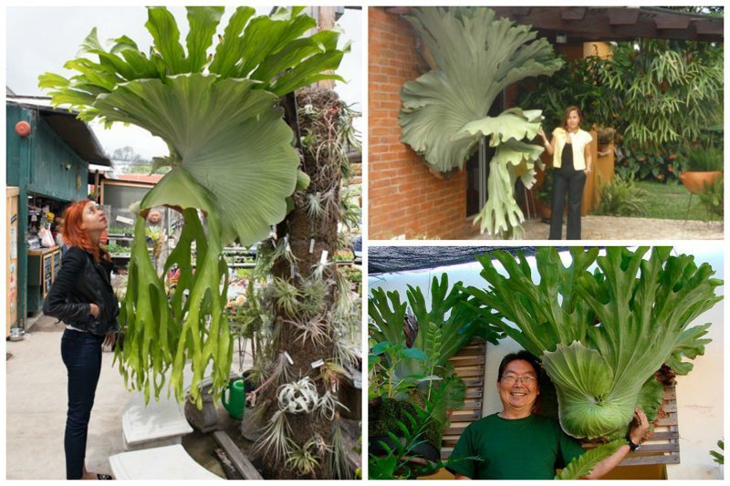 Потрясающие растения нашей планеты