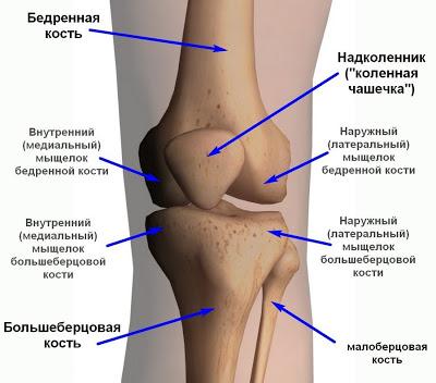 Боли в коленях: лечение народными средствами