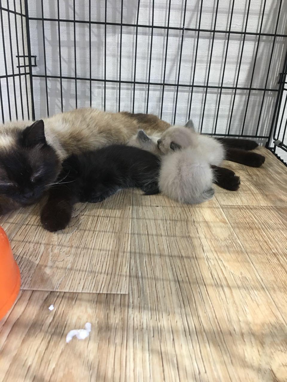 На дачах выбросили кошку с котятами… Кто не равнодушен к чужой беде, отзовитесь!