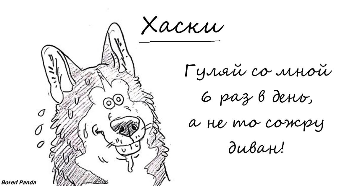 Уморительный справочник по лучшим и худшим чертам собак всех пород